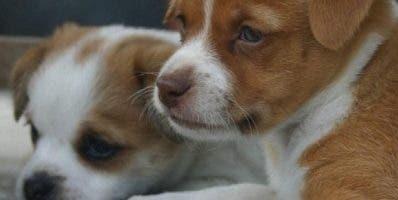 La perra había procreado  ocho cachorros.