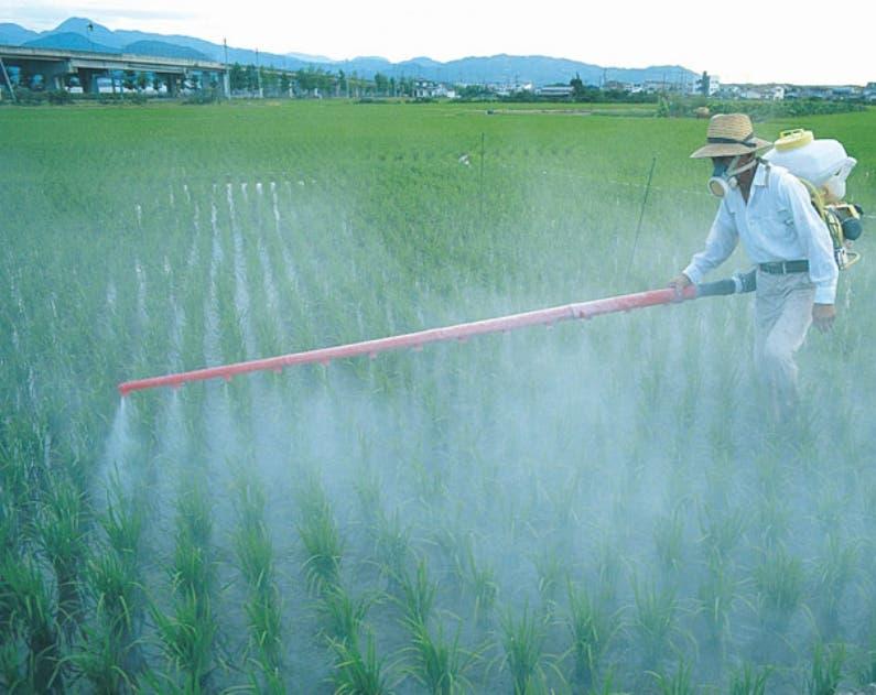 Controlar expansión de plagas es prioritario para el sector.