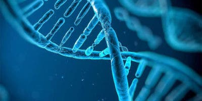 causas-geneticas-diferencias-individuos_lrzima20180521_0026_11