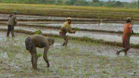 El país es autosuficiente en la producción de arroz;tiene inventario para demanda local.