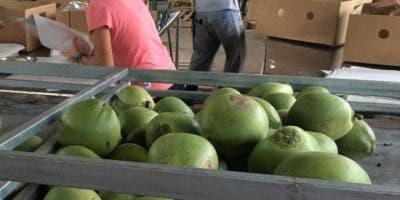 En el año 2017  el país exportó 12,364 unidades de coco.
