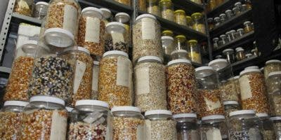 La  conservación de semillas típicas puede alcanzar  cien años, dependiendo temperaturas.