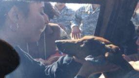 El can es propiedad de Janis Cavieres.