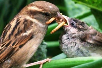 Las aves cazan insectos activamente .
