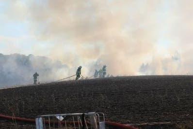 Unas siete hectáreas de terreno quedaron devastadas.