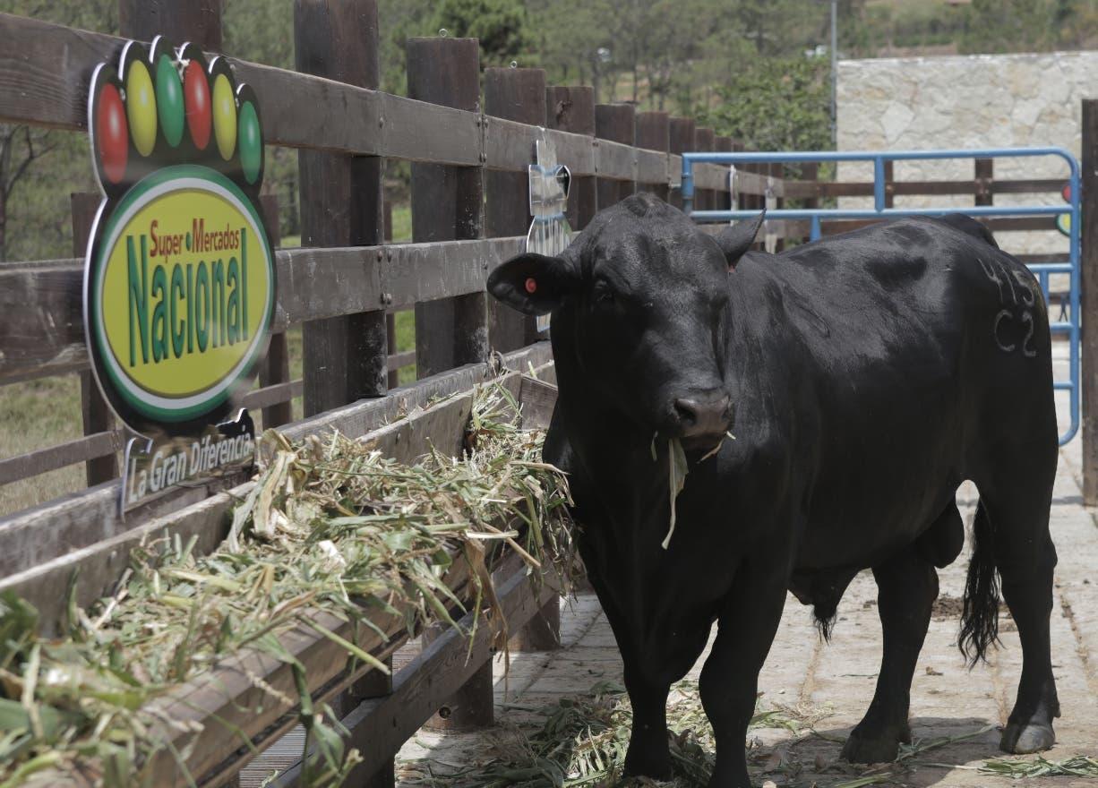 El 68 por ciento de la carne Brangus es Angus y el 32 % es Brahman.  fuente externa