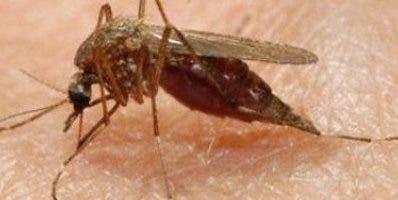 El juguete contiene sustancias naturales antimosquitos
