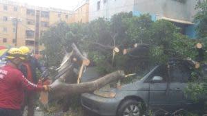 Las ráfagas de viento han derribado árboles y letreros en Villa Consuelo. Foto: Joan Vargas.
