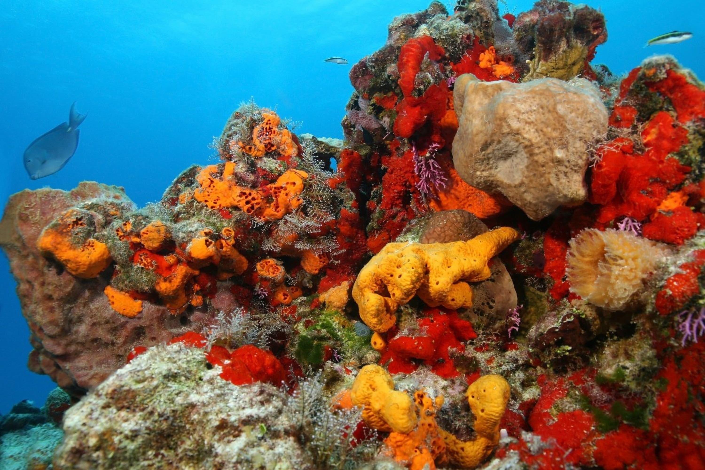 esponjas-de-mar-siluetap01