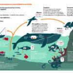 info-basuras-marinas