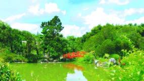 El Jardín Japonés es una de las áreas más bellas y emblemáticas del  Jardín Botánico Nacional, Dr. María  Moscoso.  Archivo.