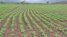 En la zona no llueve desde octubre del 2017, y los productores esperan que en estos días llueva.