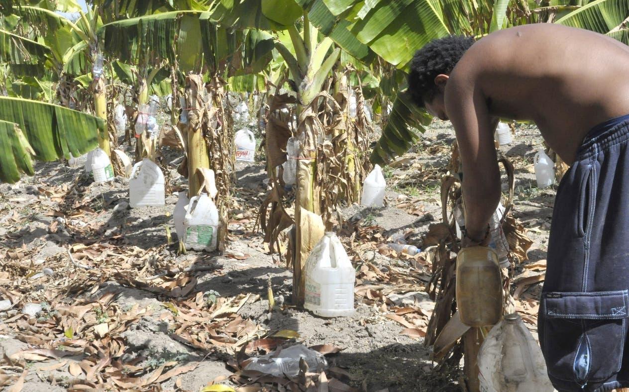 Uno de cada cinco hogares padece de hambre en la republica Dominicana.  Archivo
