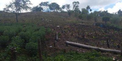 denuncian-deforestacion-en-lomas-de-gualete-y-otras-comunidades-de-la-parte-oeste-de-puerto-plata
