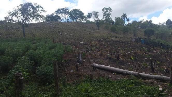 Denuncian deforestación en lomas de Gualete y otras localidades al oeste de Puerto Plata