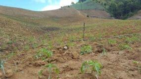 Imágenes recientes de agricultura ilegal y secuestro de agua en Las Espinas, dentro del Parque Nacional Valle Nuevo.