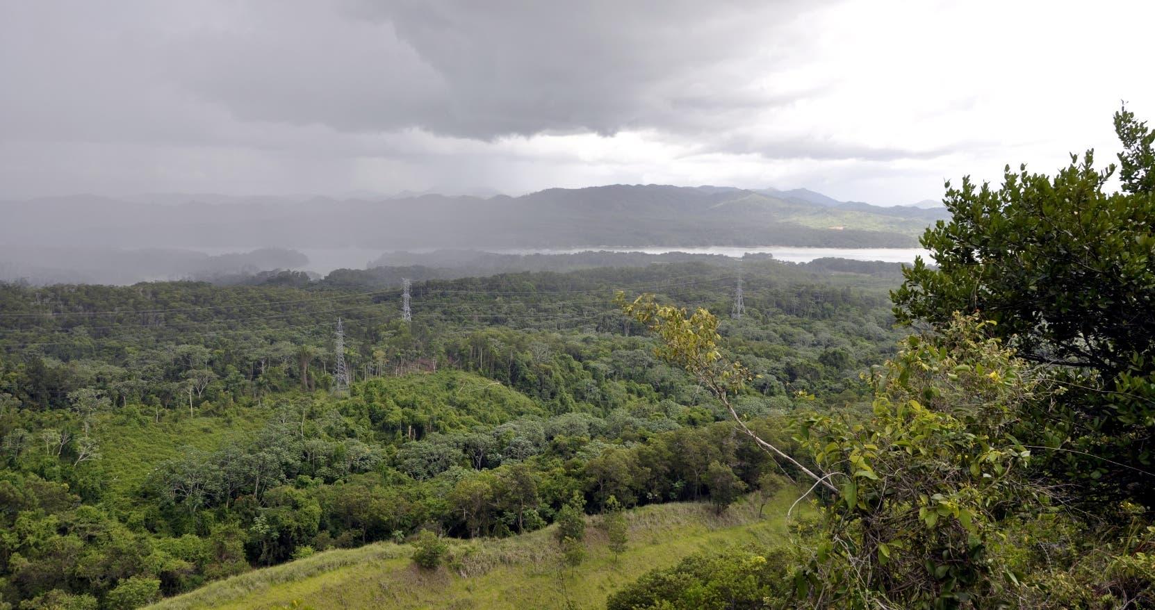 Loma Miranda pertenece  a la cordillera Central,  es un paraíso de especies endémicas, tanto de flora como de fauna .  Archivo