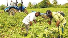 El Gobierno financia con más de RD$102 mil millones el sector agropecuario.  archivo