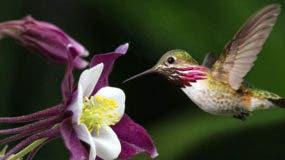 leyenda-del-colibri-enamorado-en-guatemala