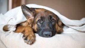 ¿Cuántas cosas sabes sobre el animal de compañía por excelencia?