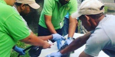 Técnicos del Zoológico Nacional mientras lo examinaban.