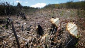 Las actividades humanas son causas de la deforestación que afecta a Haití.  fuente externa