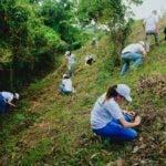 en-la-jornada-fueron-plantados-1500-arboles-de-caoba-criolla