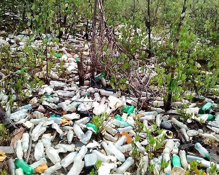 Los desechos sólidos que están siendo retirados del área de los manglares en la hermosa Bahía de Luperón, son arrastrados por varias cañadas.