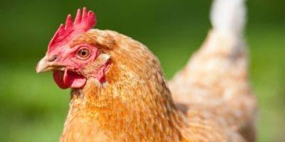 Miles de millones de animales son sacrificados cada año para alimentar a la población del planeta. ¿Es esto sostenible?