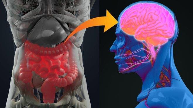 Enfermedad de Parkinson podría originarse en el apéndice