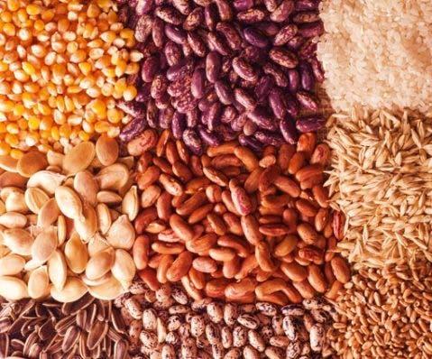 Semillas certificadas reducen costo de producción.
