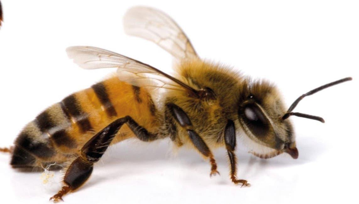 Los insectos: Una de las especies que más aportan al planeta