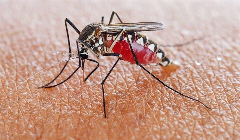 Casos de malaria en el cuna reflejan incremento con respecto al 2019