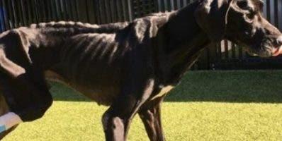 Los dueños del can fueron detenidos acusados maltrato.