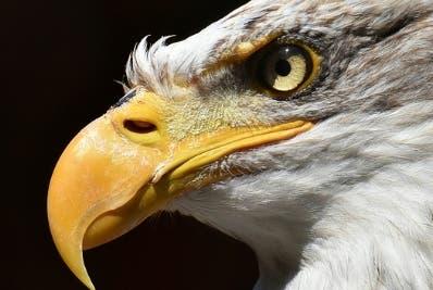 Las aves podrían tener 'gafas de sol' natural