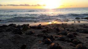 De          forma particular, las tortugas marinas  están protegidas, igual el pez loro y la langosta en época de reproducción.