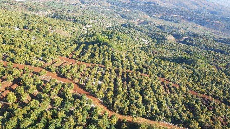Vista aérea de la plantación de 70 mil tareas  sembradas de aguacate y con 300 kilómetros de caminos de acceso.