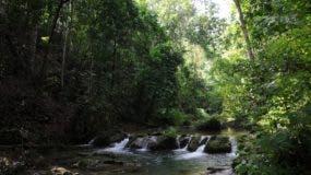 Para lograr  la  meta,  alrededor de 57 dueños  de  parcelas    aceptan conservar  los bosques    en gestiones    de ganadería.