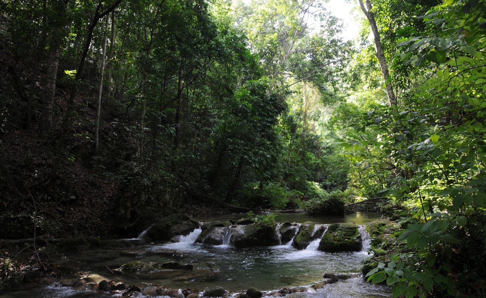 La cobertura boscosa del país aumentó a 51%