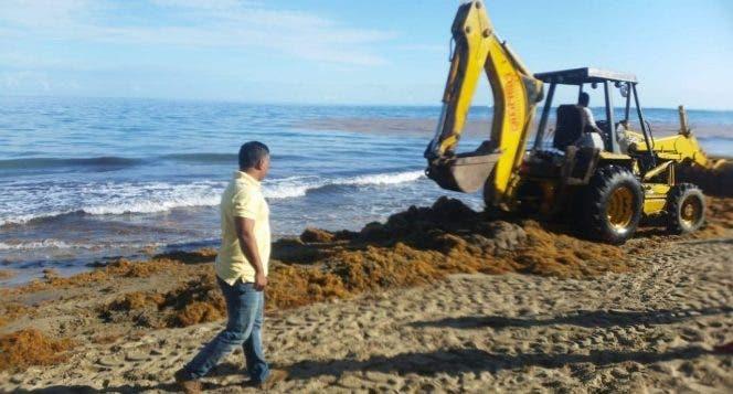Para retirar decenas de toneladas de algas tipo sargazo que invadieron las playas de Cabarete, se contrataron equipos pesados