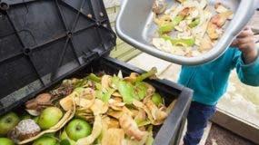 Los alimentos se pierden o se desperdician desde la producción agrícola  inicial hasta el consumo final.  Archivo