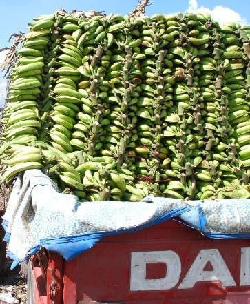 Inespre oferta plátanos a mitad precio del mercado