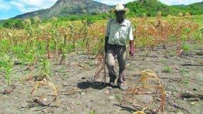 """El  sur, suroeste y noroeste fueron declarados en """"Estado de sequía"""" por la Onamet."""