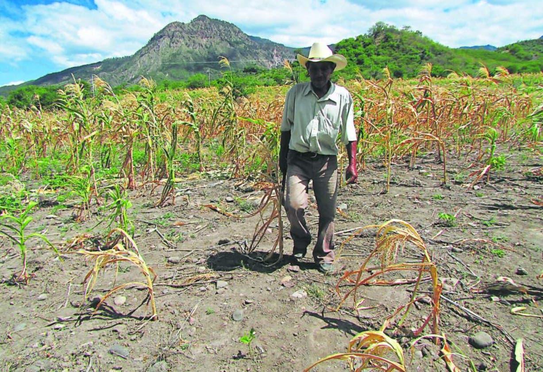 Cambio climático deja pérdidas por más de 74.8 millones de pesos