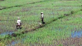 agricultura-foto-archivo-dl_11297923_20190222094124