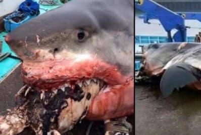Varios pescadores vieron al tiburón comerse la tortuga.
