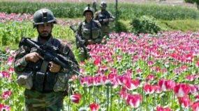 Soldados pasan por un cultivo de flores de amapola en Afganistán.