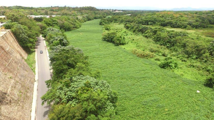 Vista panorámica captada con un dron sobre el problema que representa la acumulación de lilas.   ELIESER TAPIA