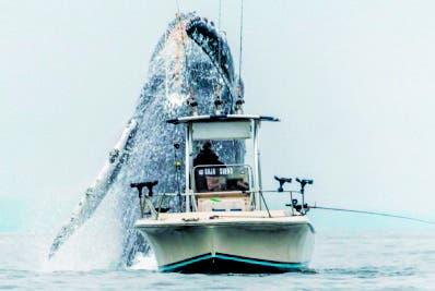 La Bahía de Monterrey se convierte en la ruta de ballenas.