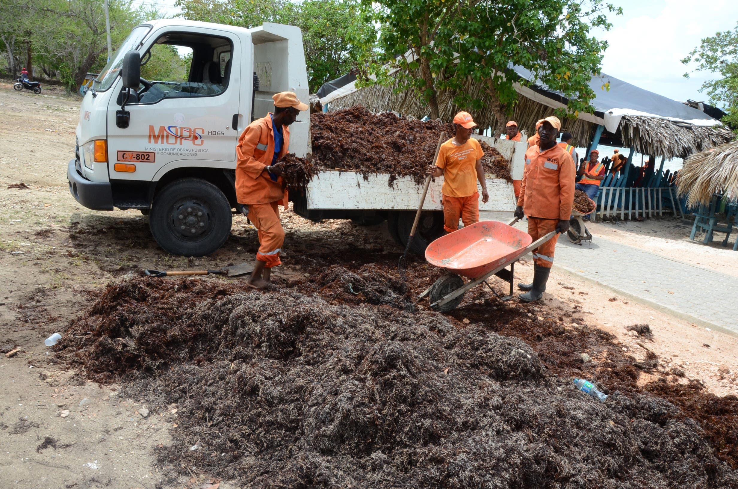 7. brigadas del Ministerio de Obras Públicas  han sacado 70 toneladas de sargazos sin afectar la zona. Foto José de León